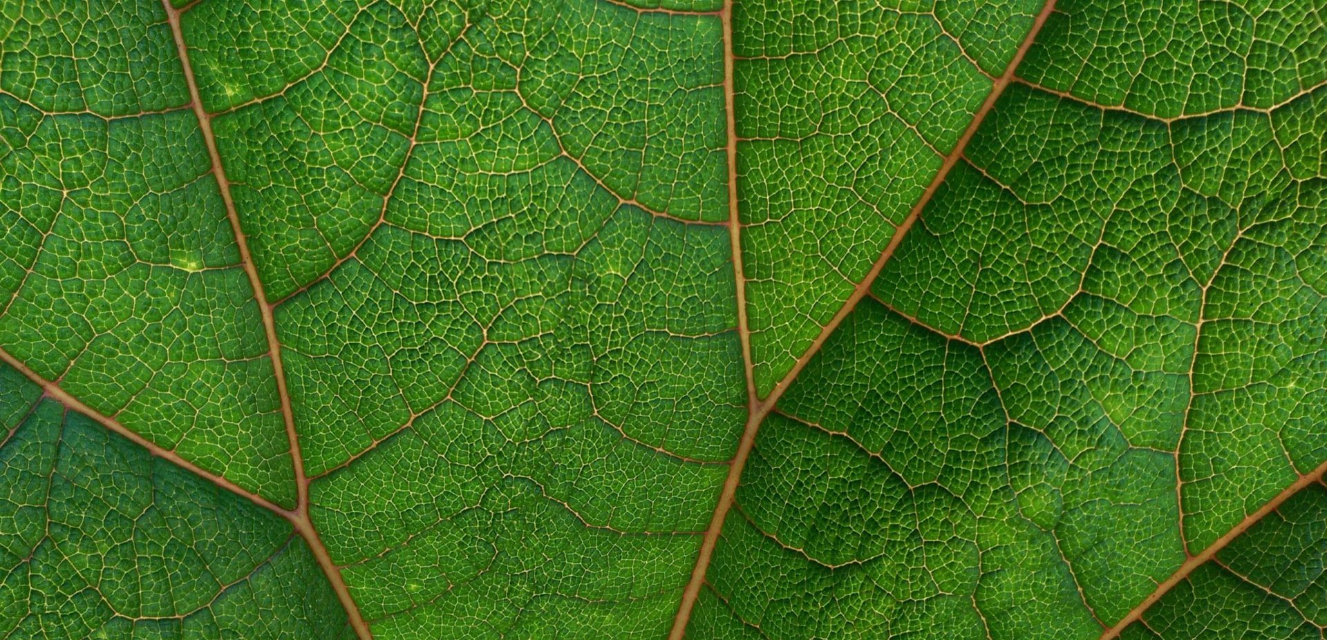 Transicion Verde