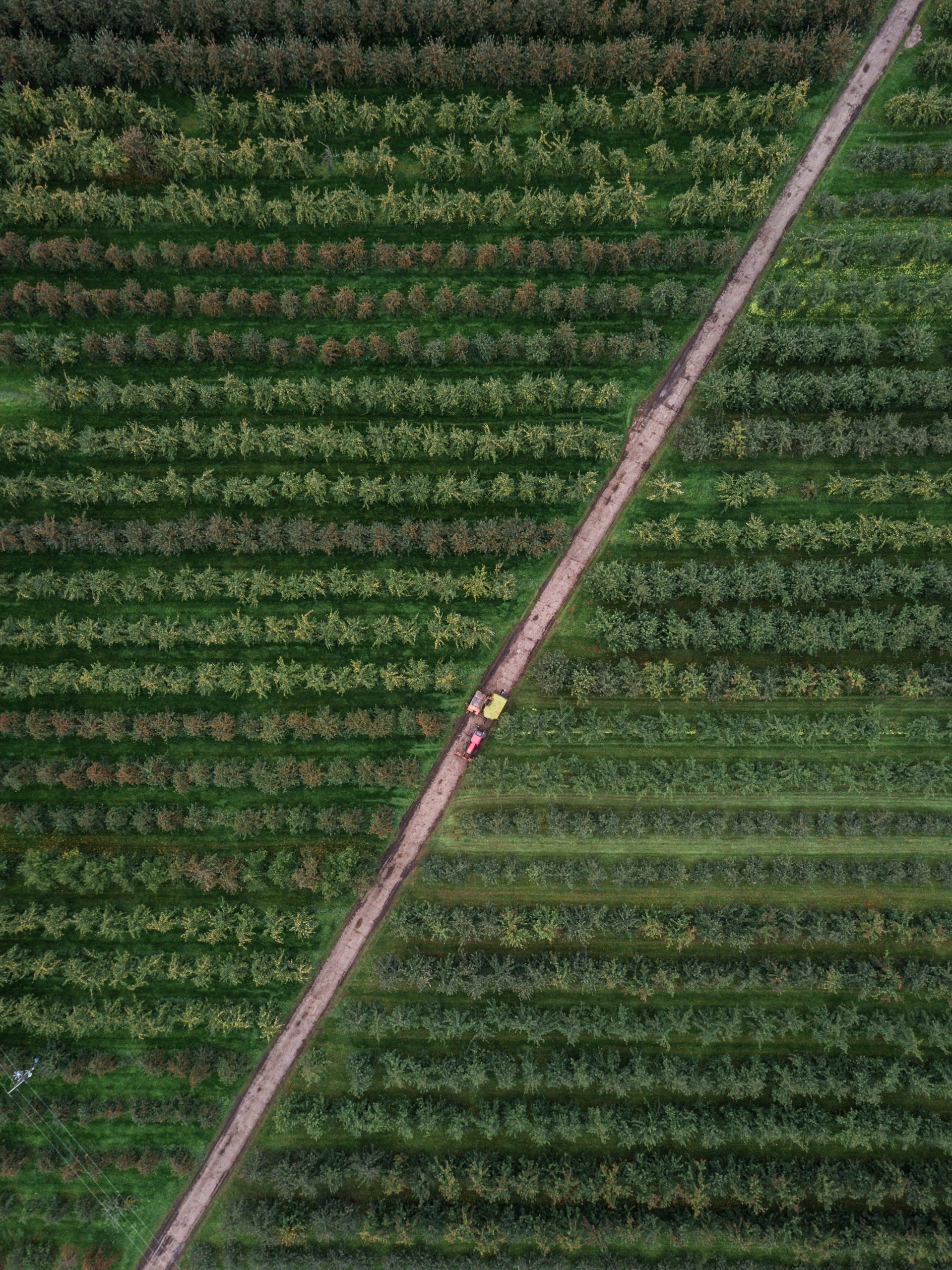 Ciclo #FairSustainableFood | Hacia un sistema alimentario justo y sostenible.