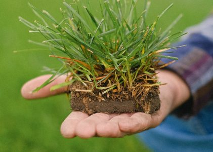 21 octubre | El potencial transformador de la agroecología.