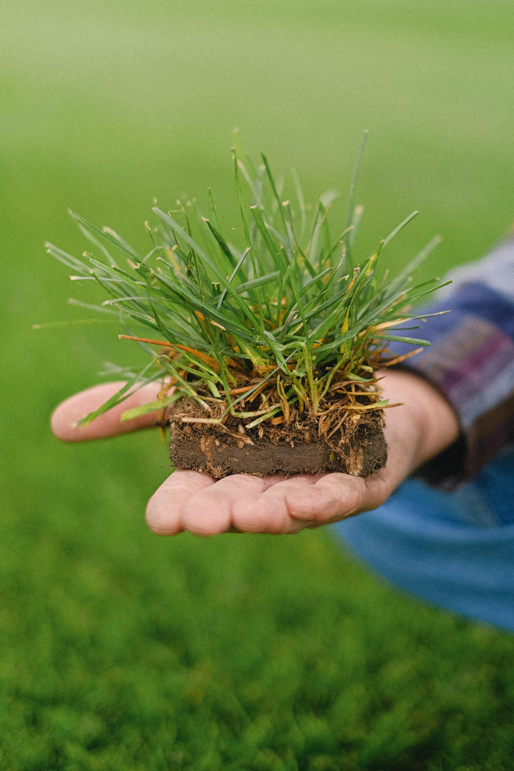 21 octubre   El potencial transformador de la agroecología.