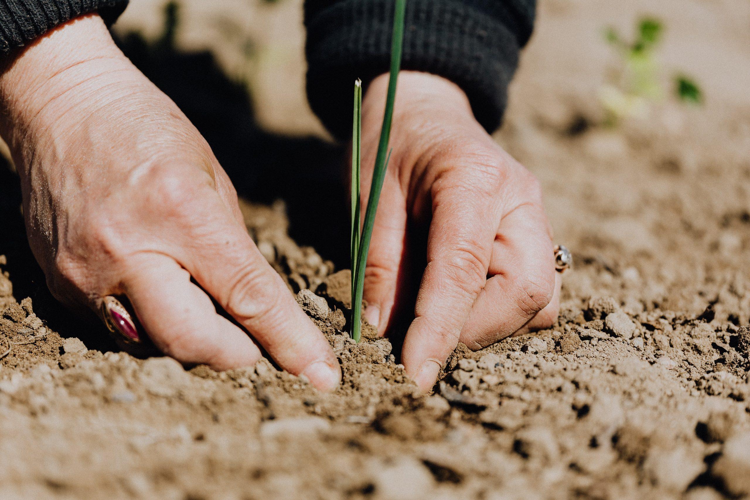 21 septiembre | Proteger el suelo: el gran reto de la agricultura | Ciclo #FairSustainableFood